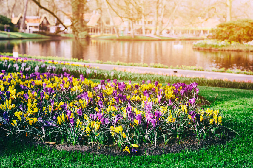 Keukenhof Gardens, the Netherlands paulgrecaud123rf