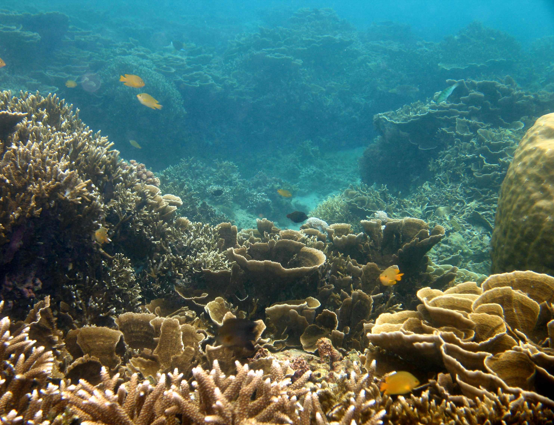 Snorkeling-Anilao