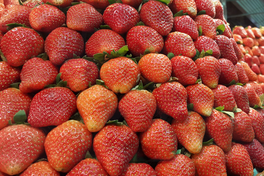 Berry Fun 5 Places To Go Fruit Picking In The Philippines