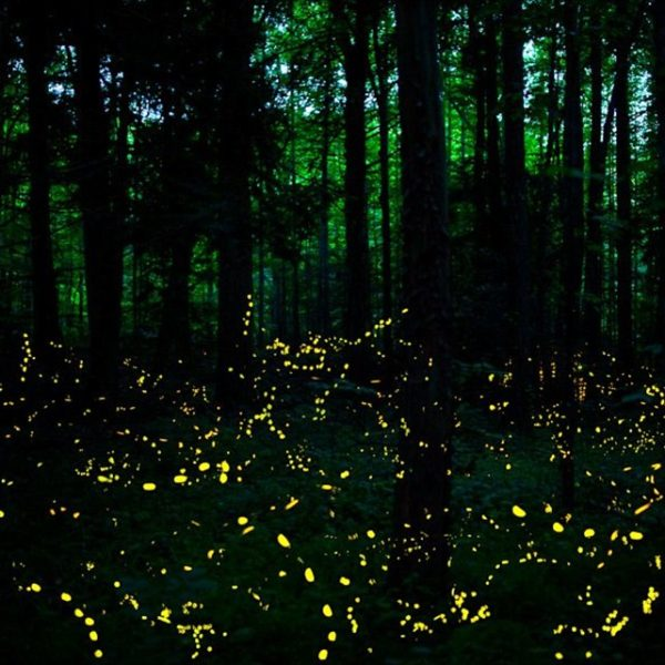 The Best Places For Firefly Watching In The Philippines