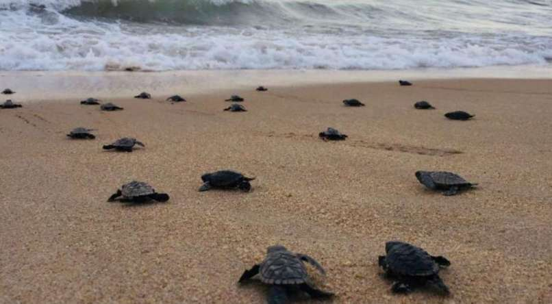 Endangered Turtles Beaches