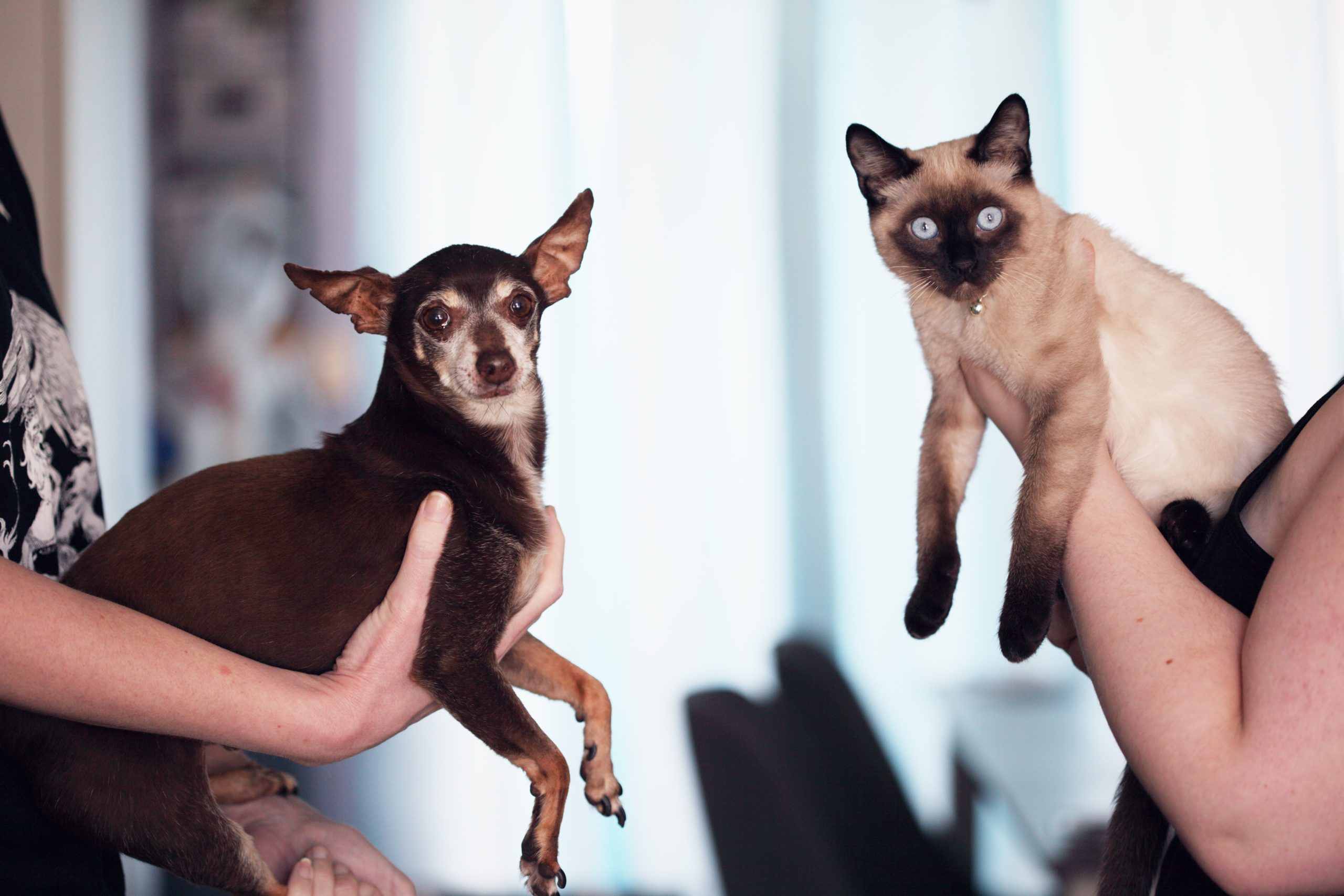 Shenzhen Bans Consumption of Cats, Dogs, and Wildlife