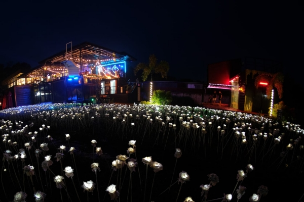 5000 LED Roses at Janna's Place